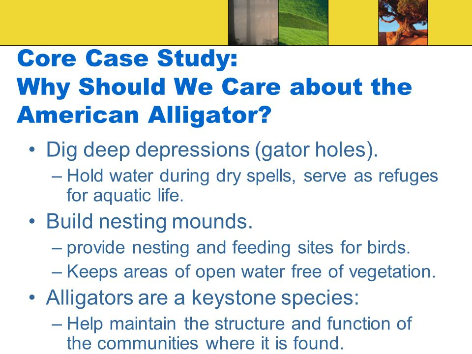 Core Case Study: Why Should We Care about the American Alligator.