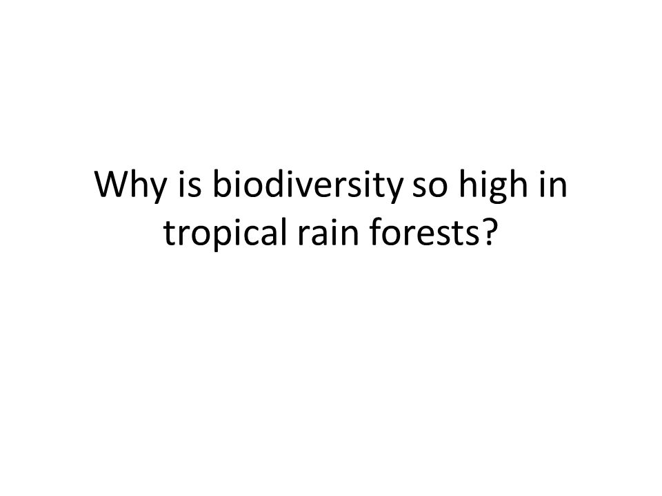 Why is biodiversity so high in tropical rain forests?