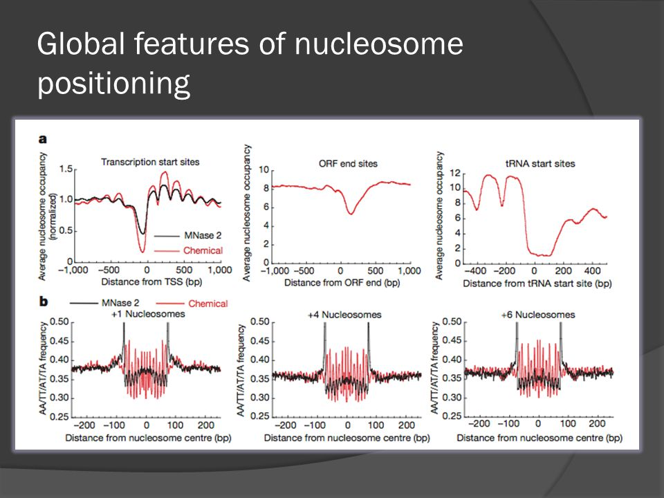 Global features of nucleosome positioning