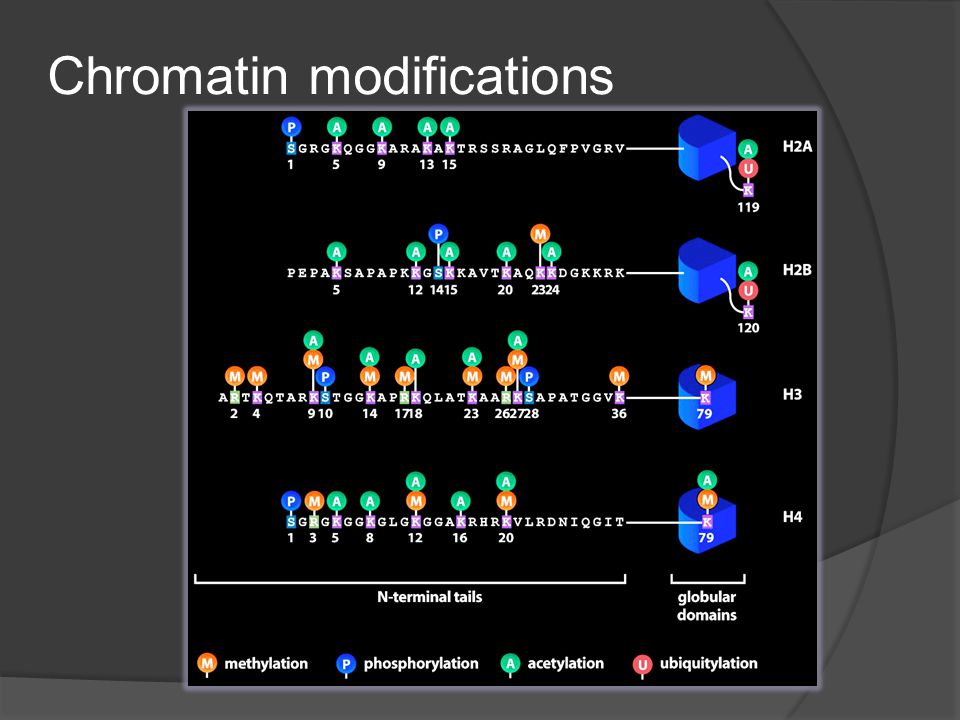 Chromatin modifications