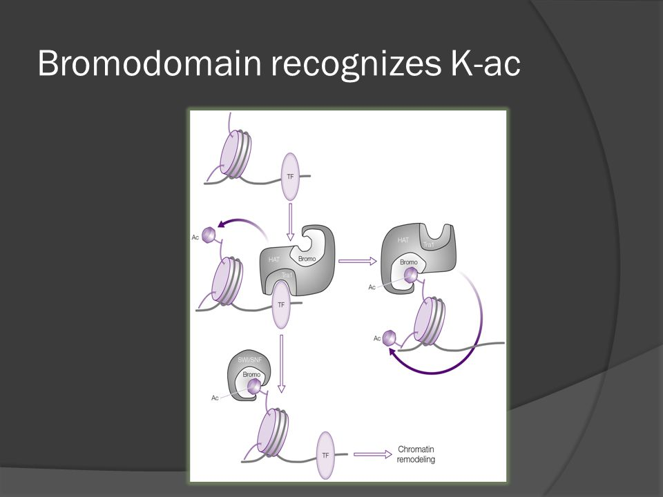 Bromodomain recognizes K-ac