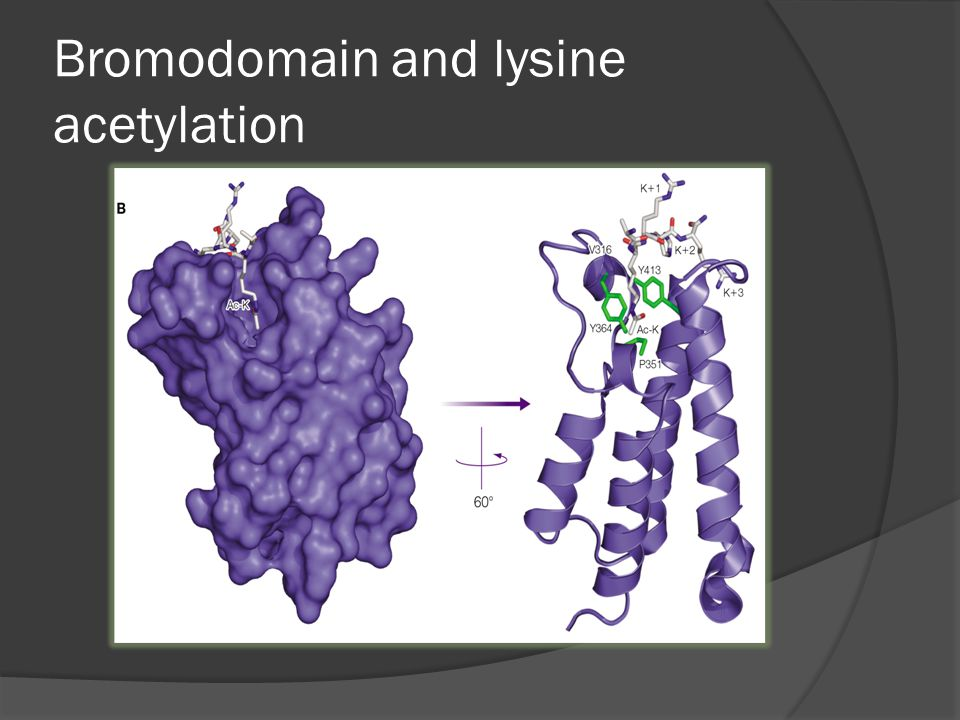 Bromodomain and lysine acetylation