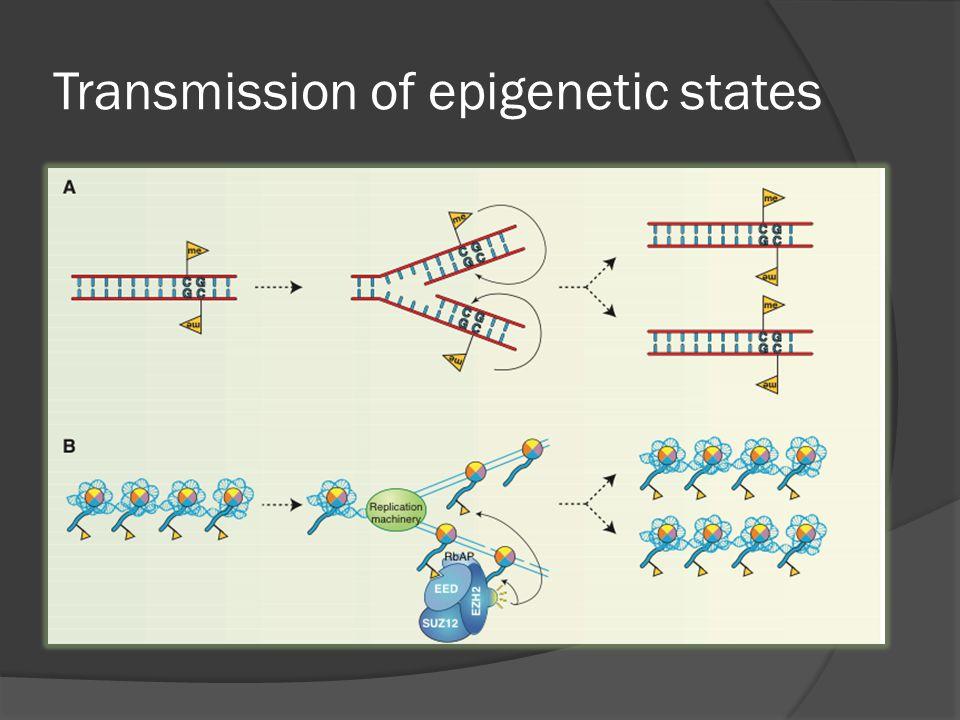Transmission of epigenetic states