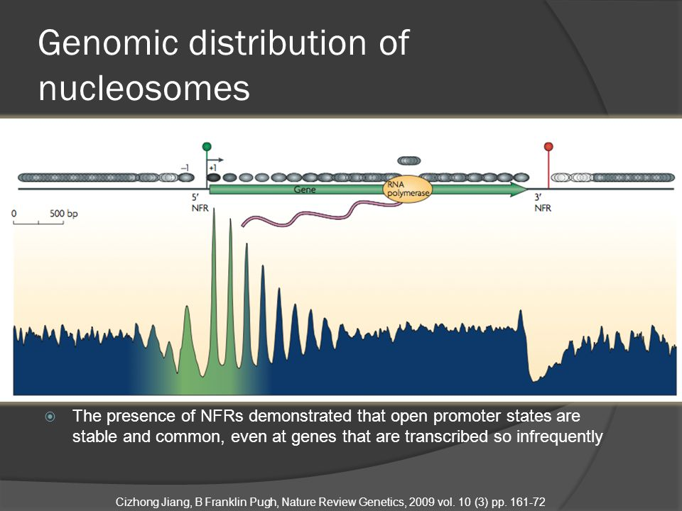  Nucleosome spacing is regulated by chromatin remodeling factors such as ISWI and linker histone H1  Nucleosome spacing in different species may differ (185bp in human, 165 in yeast) Cizhong Jiang, B Franklin Pugh, Nature Review Genetics, 2009 vol.