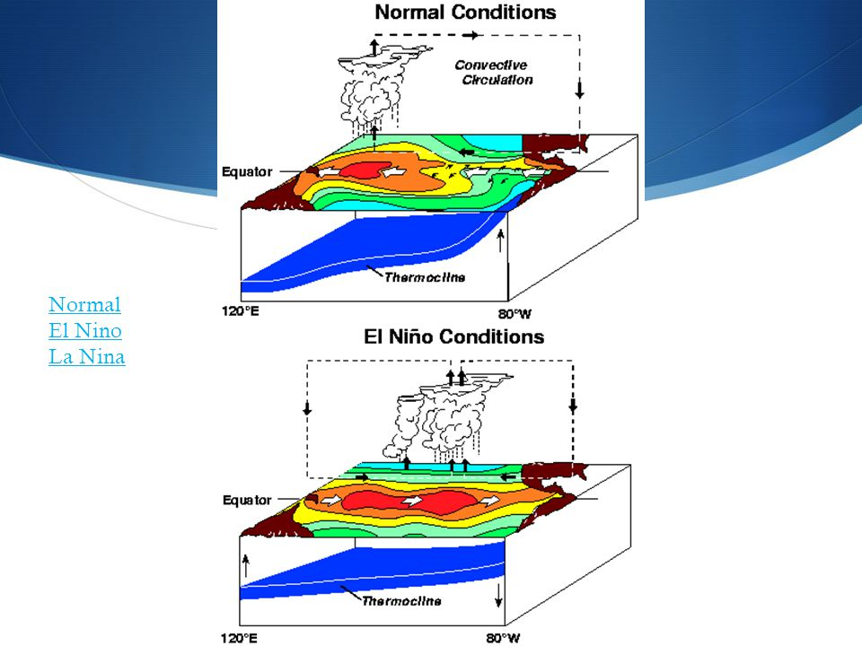 Normal El Nino La Nina