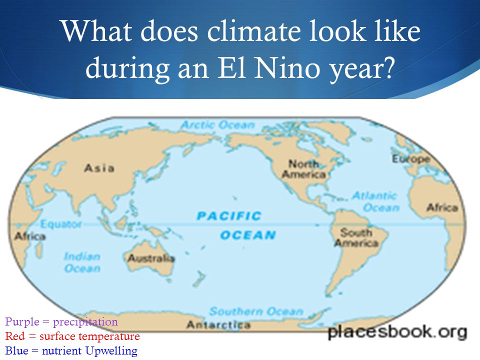 What does climate look like during an El Nino year? Purple = precipitation Red = surface temperature Blue = nutrient Upwelling