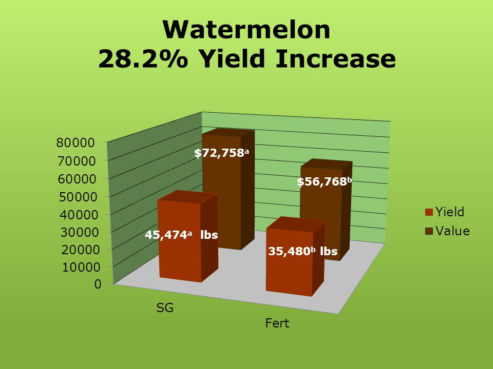 Watermelon 28.2% Yield Increase