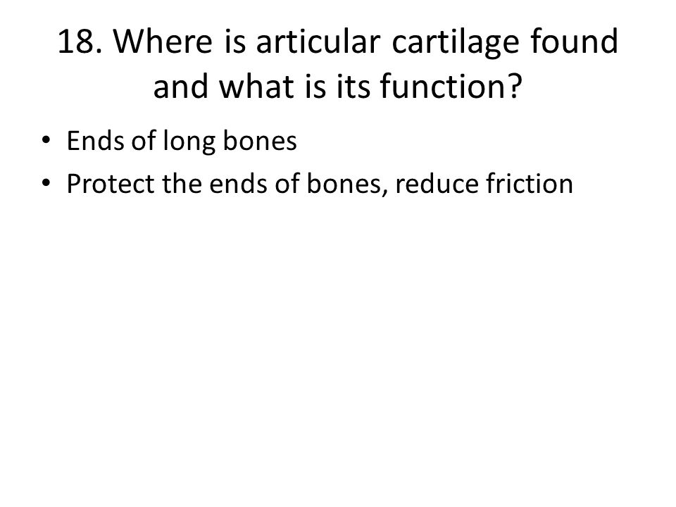 18.Where is articular cartilage found and what is its function.