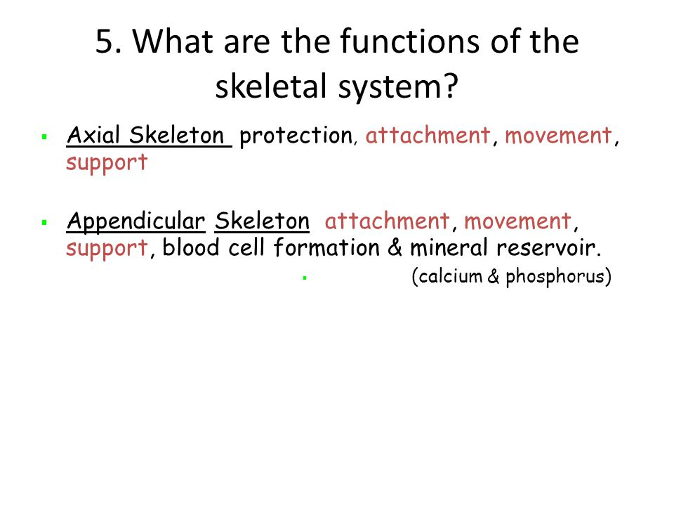 5.What are the functions of the skeletal system.