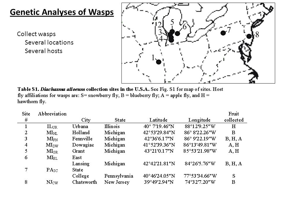 Collect wasps Several locations Several hosts Genetic Analyses of Wasps
