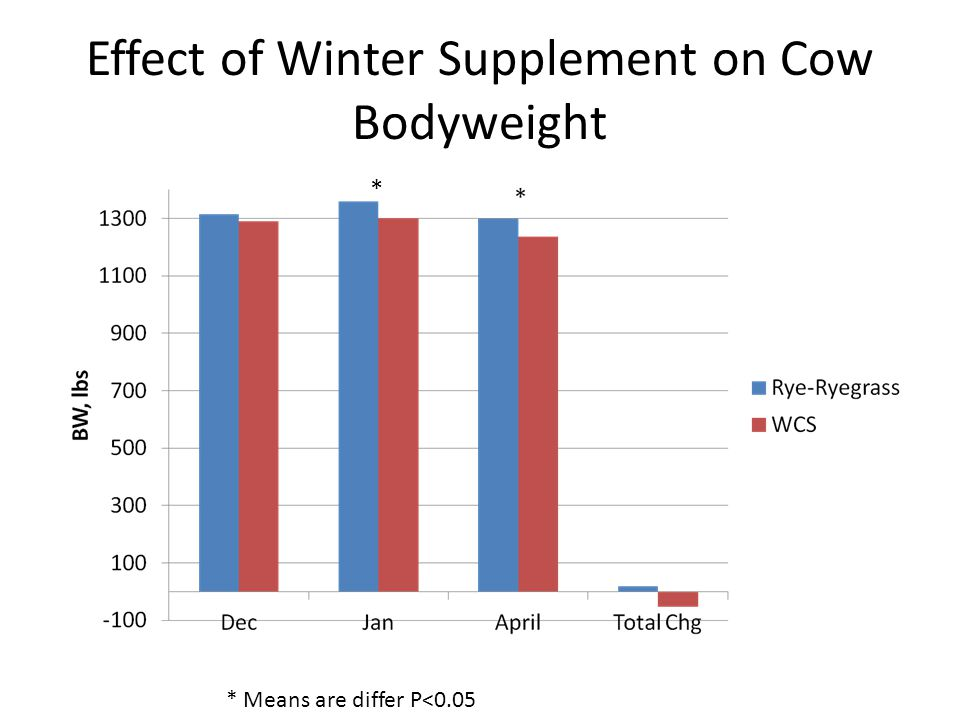 Effect of Winter Supplement on Cow Bodyweight * * Means are differ P<0.05