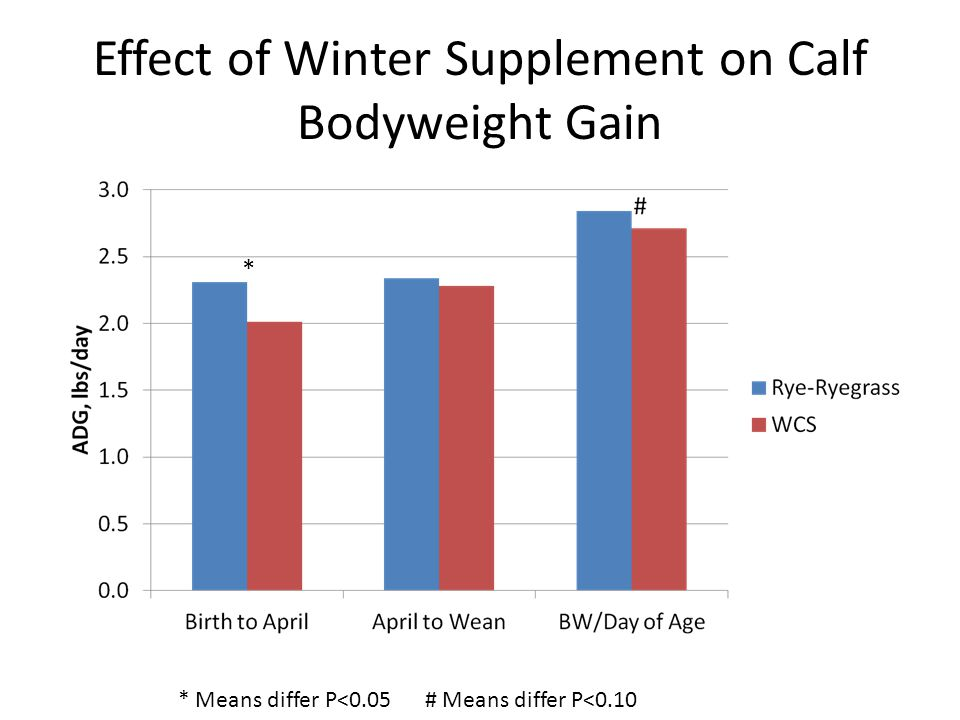 Effect of Winter Supplement on Calf Bodyweight Gain * * Means differ P<0.05 # Means differ P<0.10