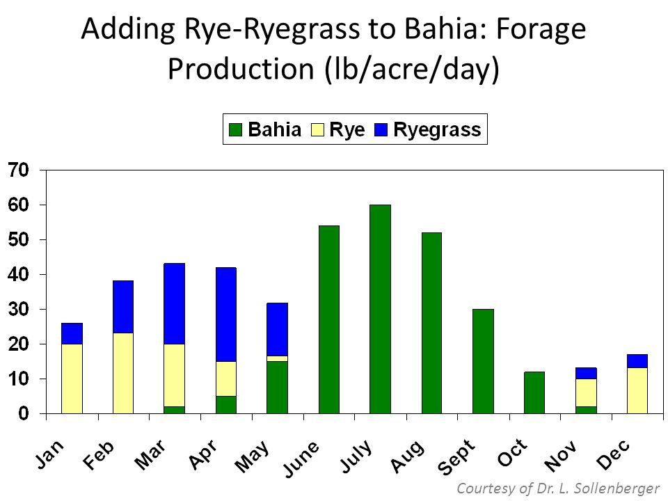 Adding Rye-Ryegrass to Bahia: Forage Production (lb/acre/day) Courtesy of Dr. L. Sollenberger