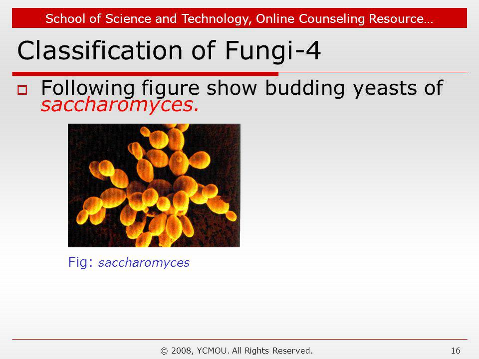 School of Science and Technology, Online Counseling Resource… © 2008, YCMOU. All Rights Reserved.16 Classification of Fungi-4  Following figure show