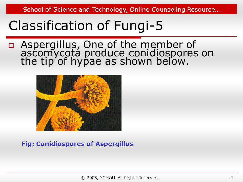 School of Science and Technology, Online Counseling Resource… © 2008, YCMOU. All Rights Reserved.17 Classification of Fungi-5  Aspergillus, One of th