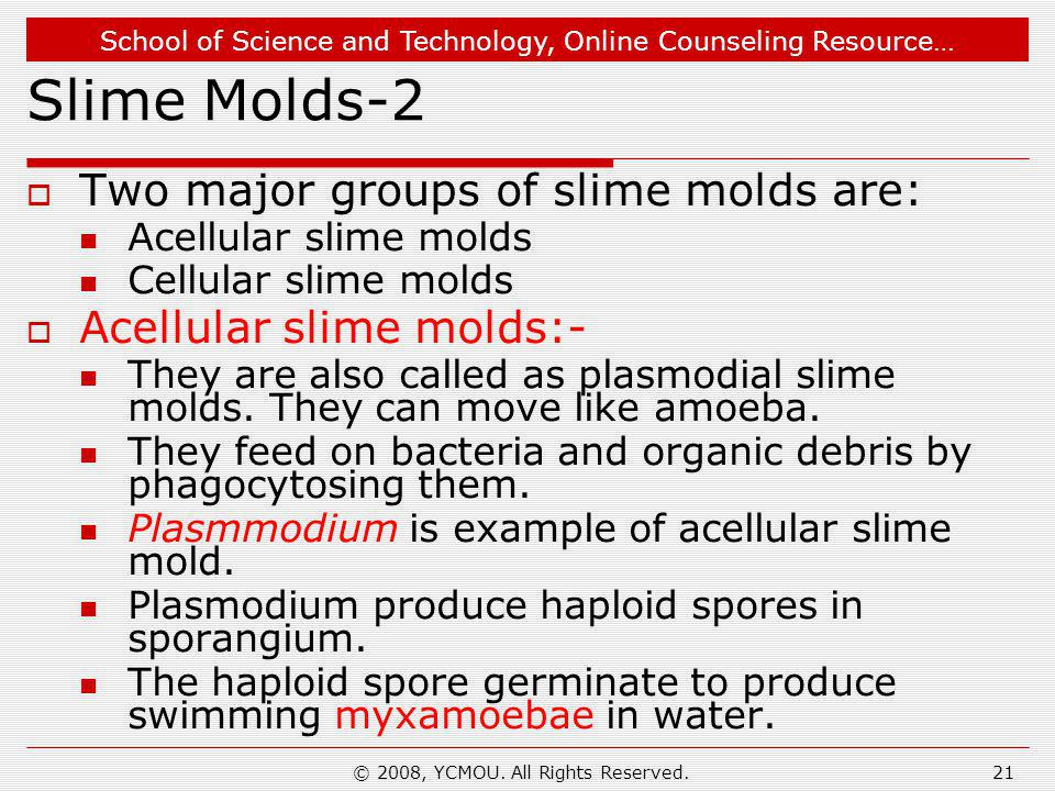 School of Science and Technology, Online Counseling Resource… © 2008, YCMOU. All Rights Reserved.21 Slime Molds-2  Two major groups of slime molds ar