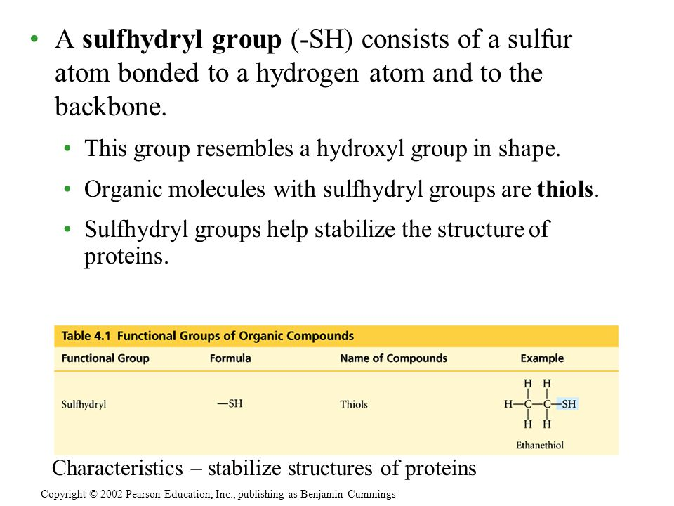 A sulfhydryl group (-SH) consists of a sulfur atom bonded to a hydrogen atom and to the backbone.