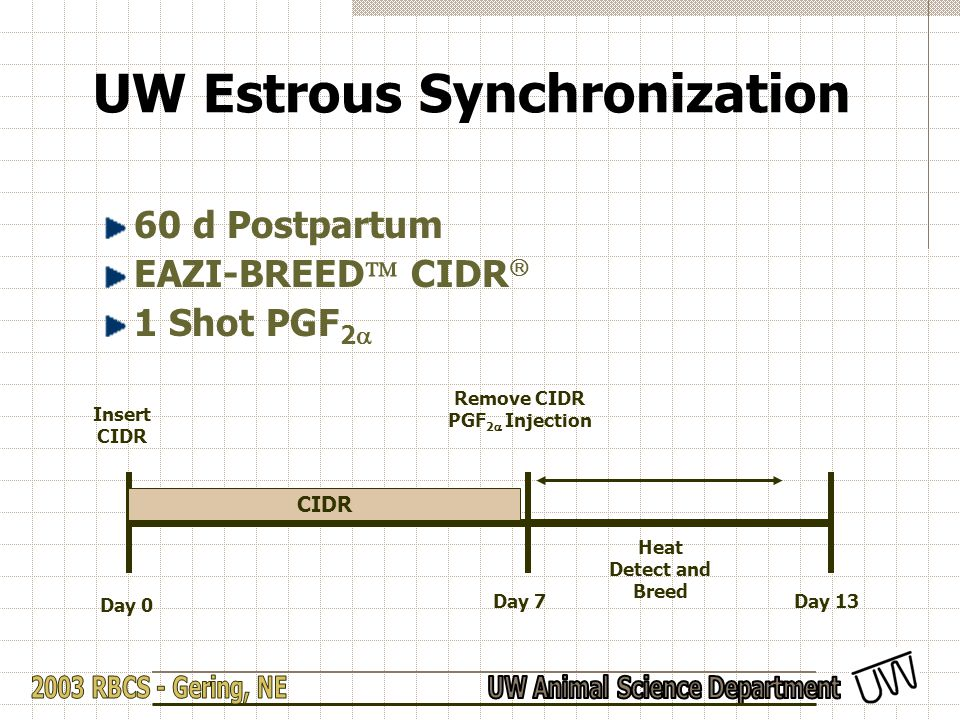 UW Estrous Synchronization 60 d Postpartum EAZI-BREED  CIDR  1 Shot PGF 2  Day 13 Day 0 Insert CIDR Day 7 Remove CIDR PGF 2  Injection Heat Detect and Breed CIDR