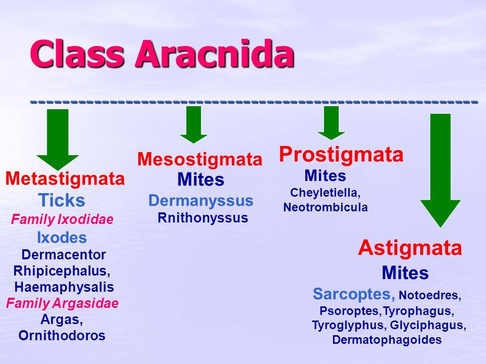 Class Aracnida --------------------------------------------------------- - Metastigmata Mesostigmata Prostigmata Astigmata Ticks Family Ixodidae Ixodes Dermacentor Rhipicephalus, Haemaphysalis Family Argasidae Argas, Ornithodoros Mites Dermanyssus Rnithonyssus Mites Cheyletiella, Neotrombicula Mites Sarcoptes, Notoedres, Psoroptes,Tyrophagus, Tyroglyphus, Glyciphagus, Dermatophagoides