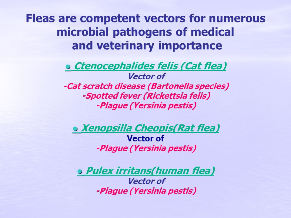 Fleas are competent vectors for numerous microbial pathogens of medical and veterinary importance ● ● Ctenocephalides felis (Cat flea) Vector of -Cat