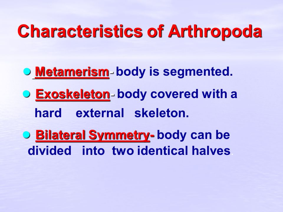 Characteristics of Arthropoda ● Metamerism- ● Metamerism- body is segmented. ● Exoskeleton- ● Exoskeleton- body covered with a hard external skeleton.