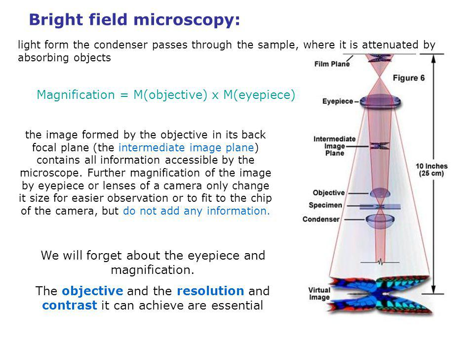 Microscope resolution – Summary: The lateral resolution of an optical microscope d: The axial resolution (in the direction of optical axis) d z : Sufficient contrast is necessary for full utilization of the available resolution
