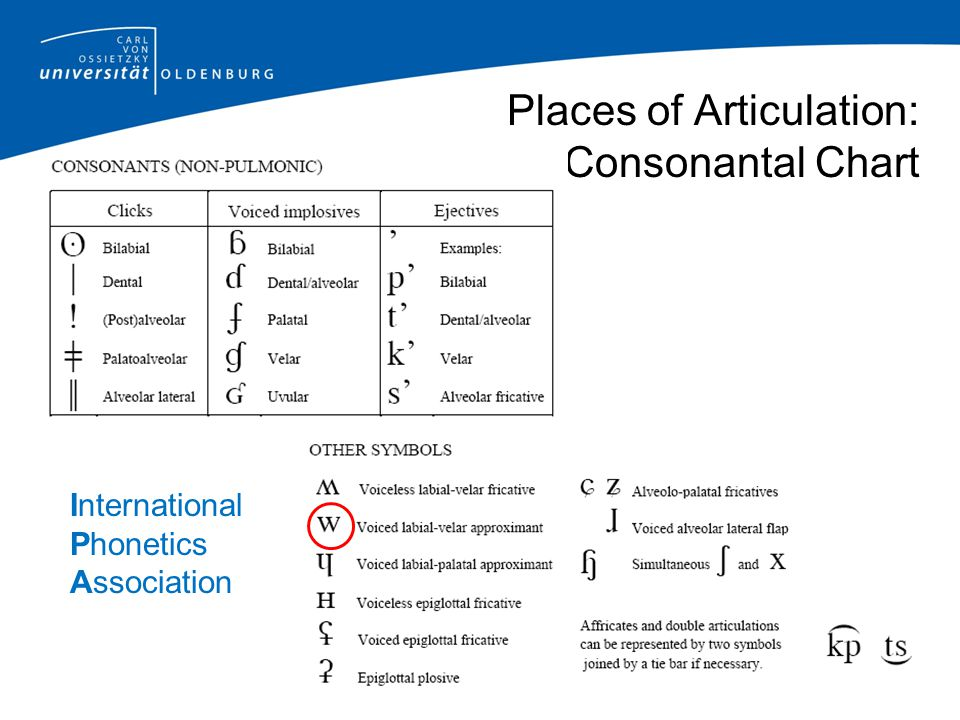 Places of Articulation: Vowels