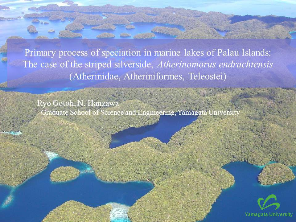 Primary process of speciation in marine lakes of Palau Islands: The case of the striped silverside, Atherinomorus endrachtensis (Atherinidae, Atheriniformes, Teleostei) Ryo Gotoh, N.