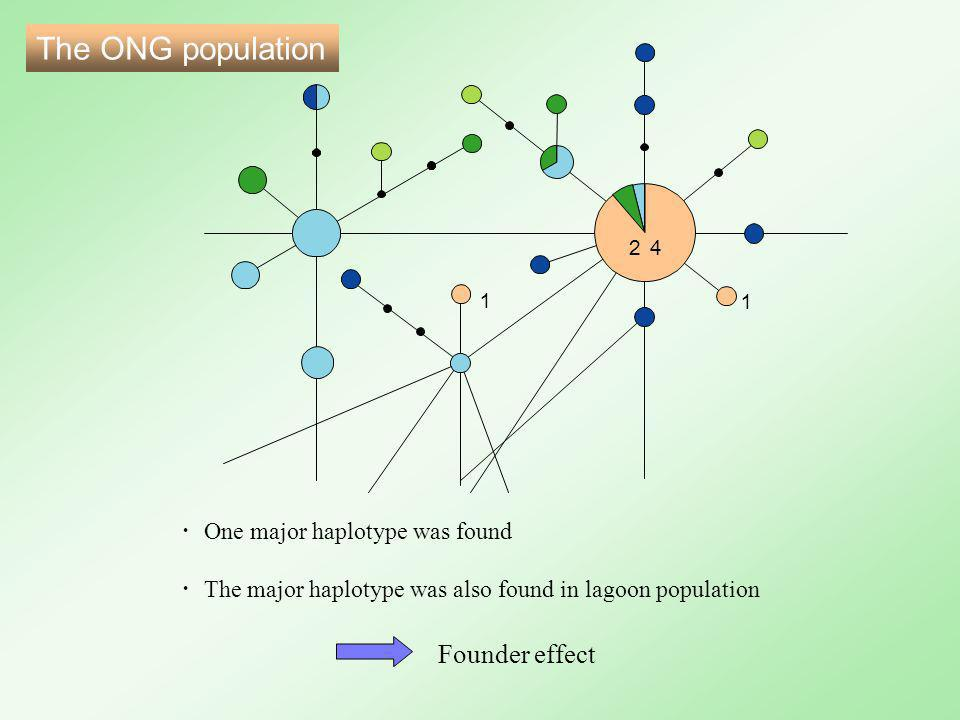 ・ One major haplotype was found ・ The major haplotype was also found in lagoon population 24 1 1 Founder effect The ONG population