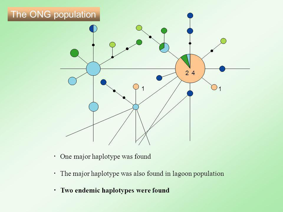 The ONG population ・ One major haplotype was found ・ The major haplotype was also found in lagoon population ・ Two endemic haplotypes were found 24 1 1