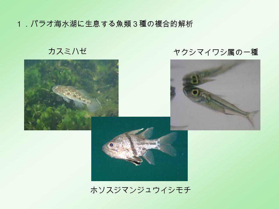 カスミハゼ ホソスジマンジュウイシモチ ヤクシマイワシ属の一種 1.パラオ海水湖に生息する魚類3種の複合的解析