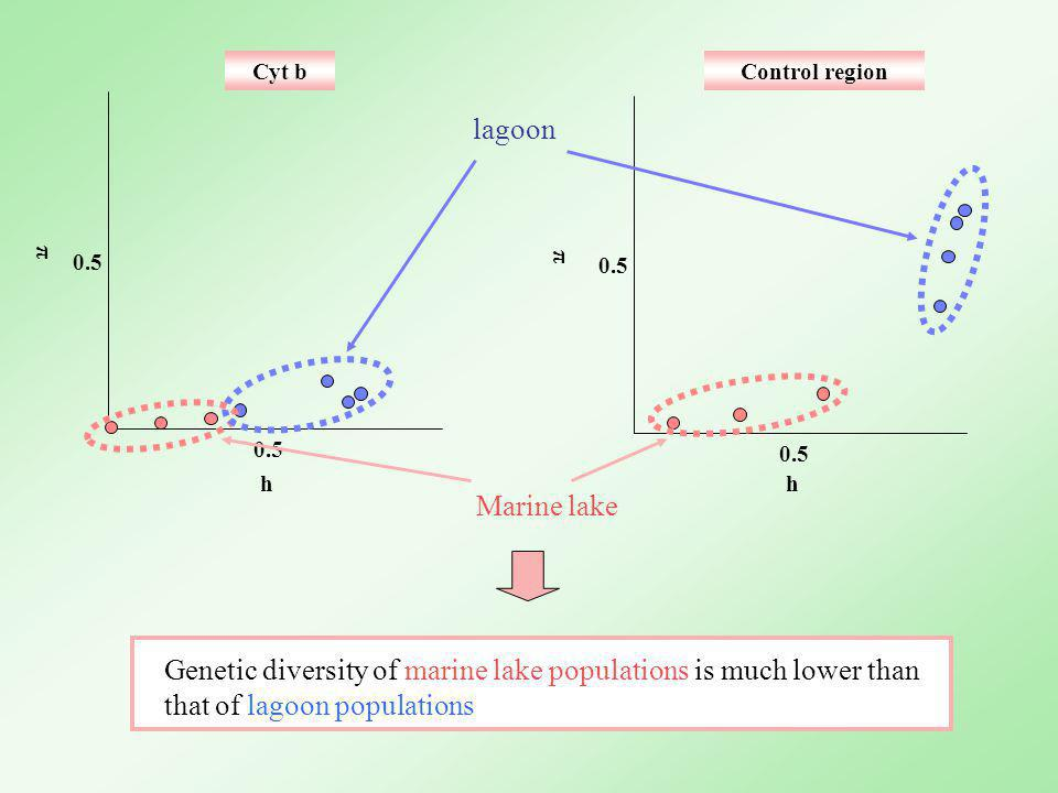0.5 h π Cyt bControl region Genetic diversity of marine lake populations is much lower than that of lagoon populations lagoon Marine lake π h