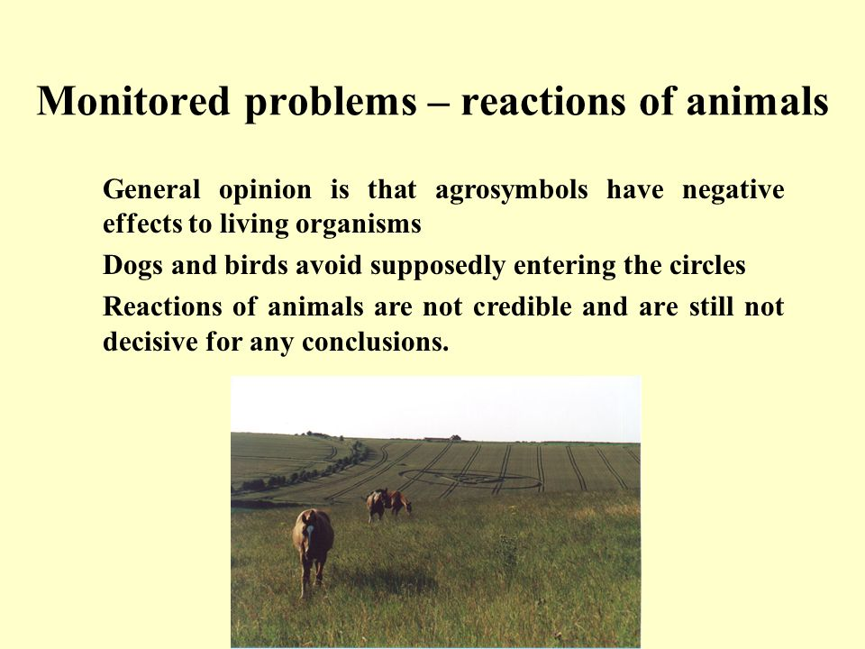 Monitored problems – reactions of animals General opinion is that agrosymbols have negative effects to living organisms Dogs and birds avoid supposedly entering the circles Reactions of animals are not credible and are still not decisive for any conclusions.