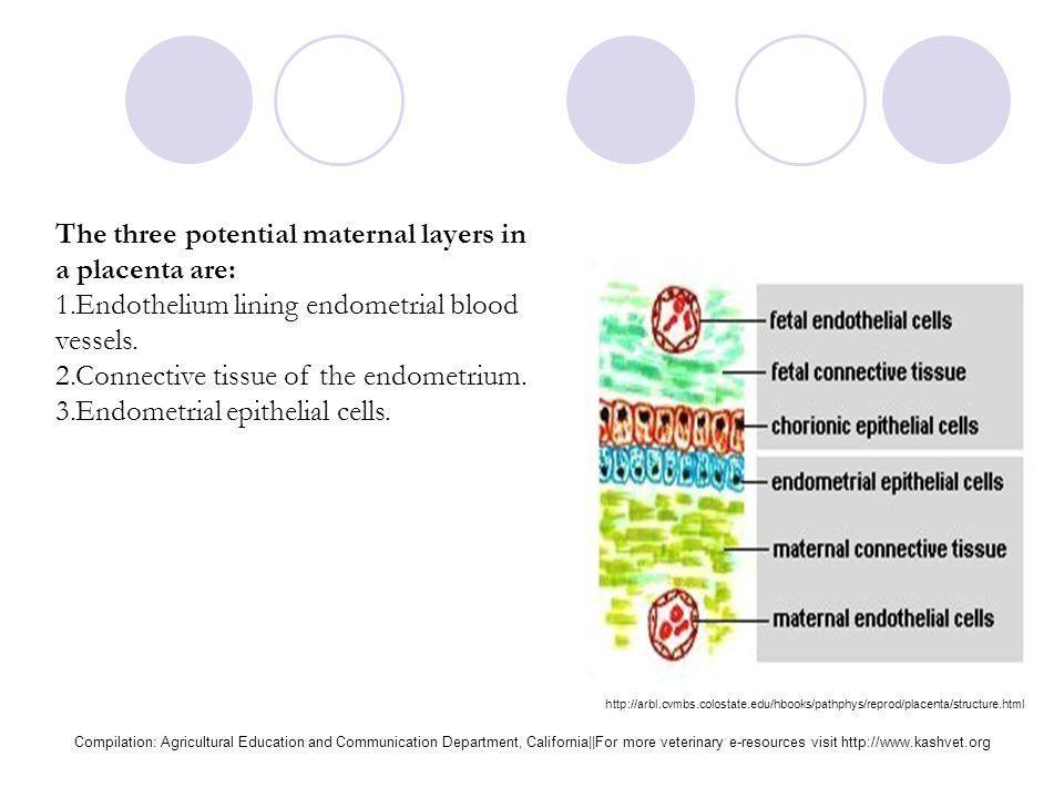 PlacentaCommon Examples Diffuse, epitheliochorialHorses and pigs Cotyledonary, epitheliochorialRuminants (cattle, sheep, goats, deer) Zonary, endothel