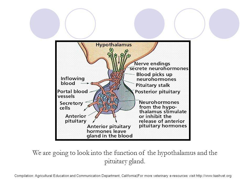 Reproductive System http://cvm.msu.edu/courses/AP/bessie/cowreproorgans3.jpg Compilation: Agricultural Education and Communication Department, Califor