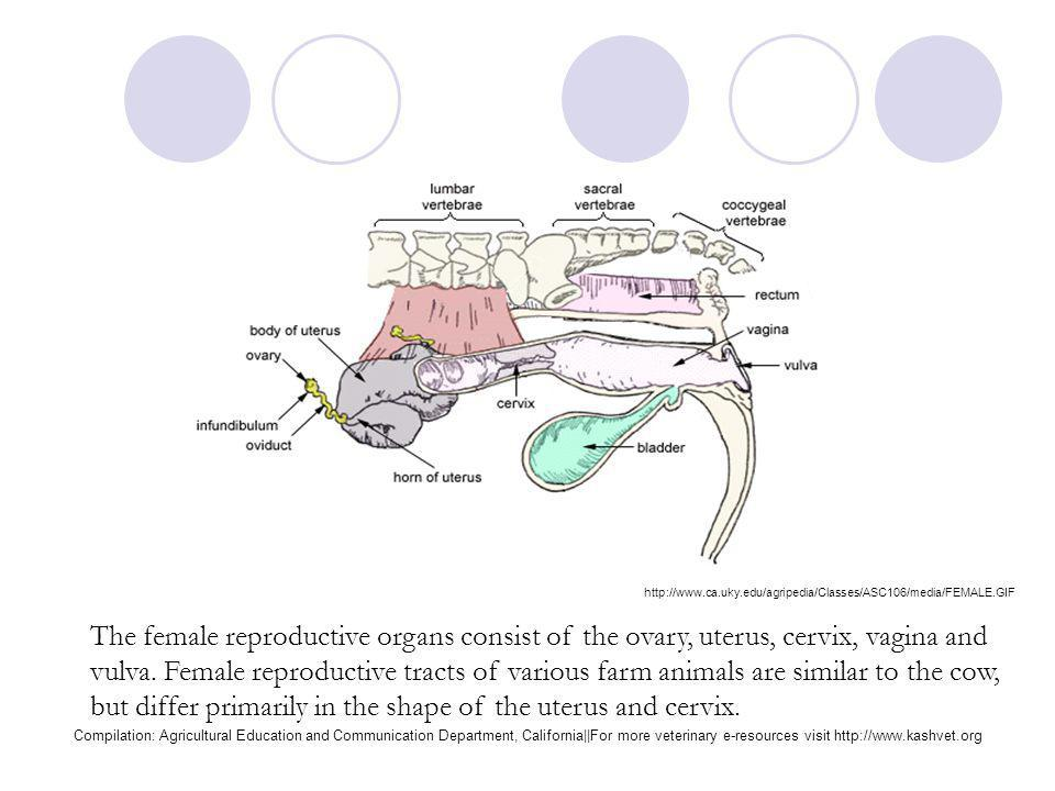Two essential organs of reproduction are located within the head of the animal. The hypothalamus controls: Body temperature, and the drive to eat and