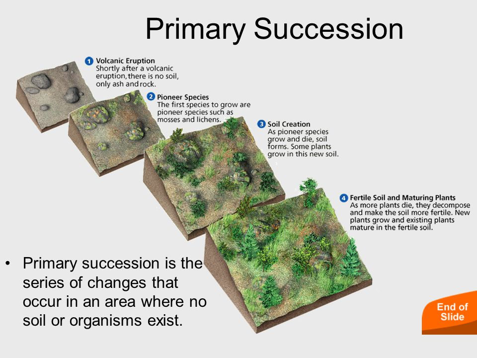 Primary succession is the series of changes that occur in an area where no soil or organisms exist.