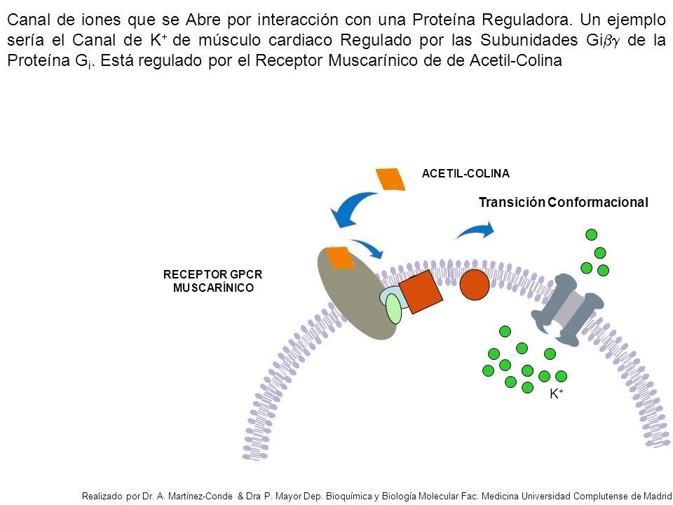 ACETIL-COLINA RECEPTOR GPCR MUSCARÍNICO Canal de iones que se Abre por interacción con una Proteína Reguladora.