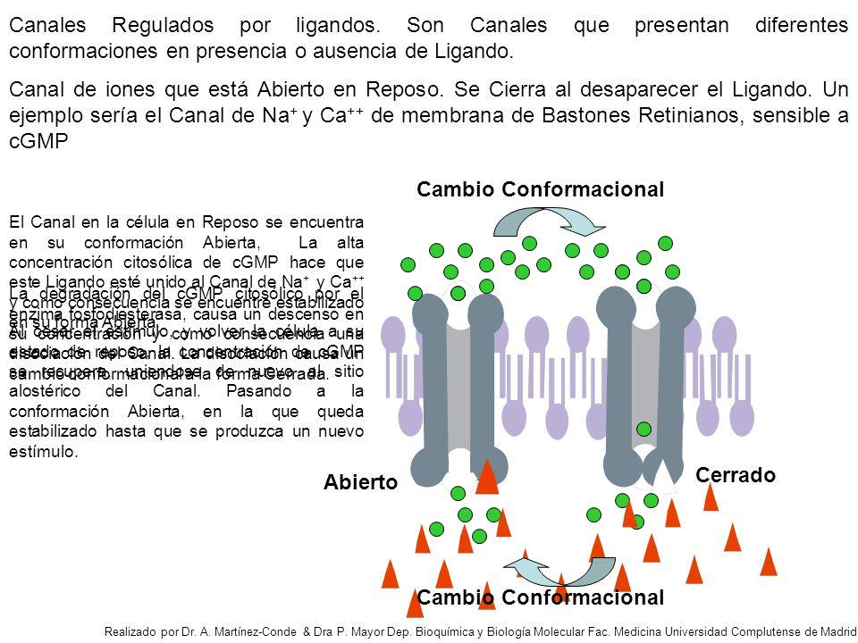 Canales Regulados por ligandos.