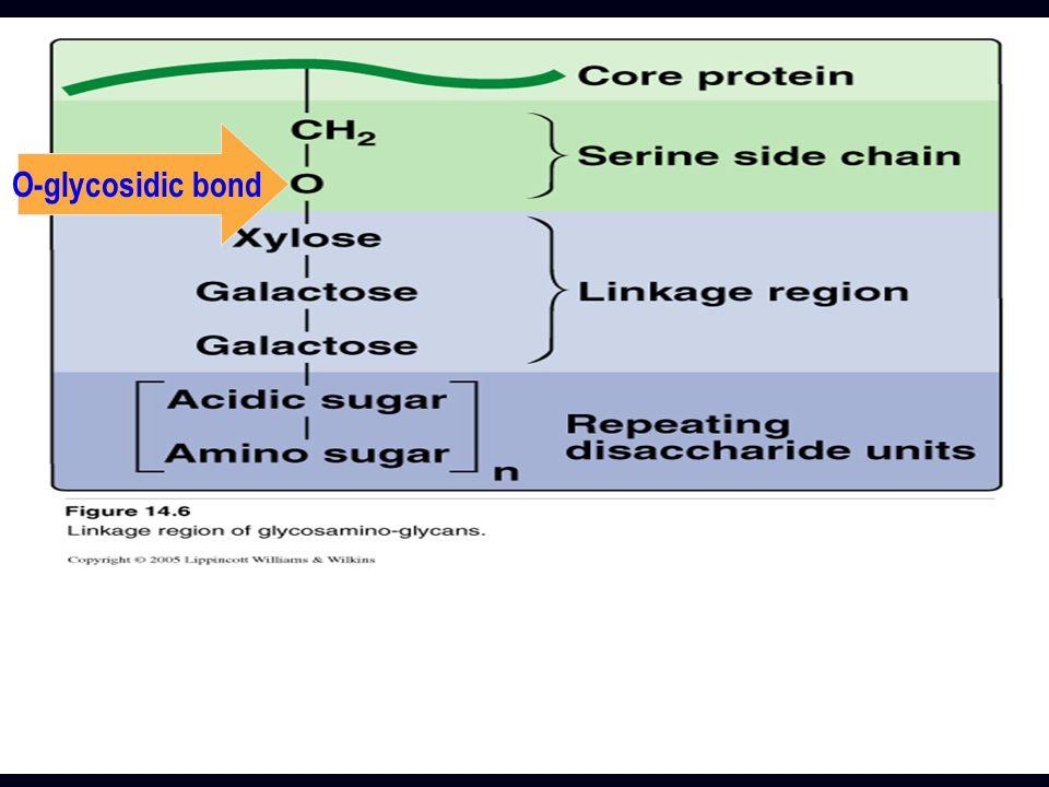 O-glycosidic bond