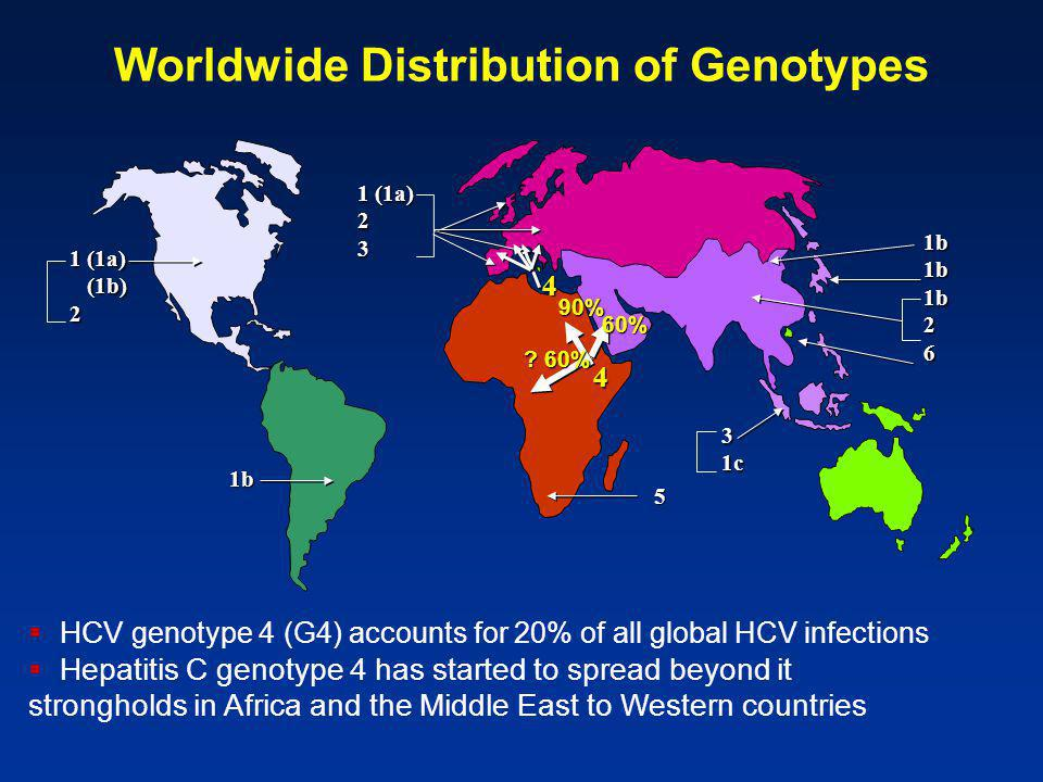 Worldwide Distribution of Genotypes 1 (1a) (1b) (1b)2 1b 1b1b1b26 1 (1a) 23 5 31c 4 4 90% .