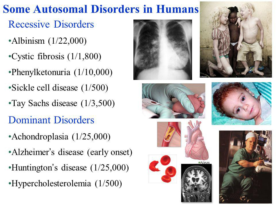 Some Autosomal Disorders in Humans Recessive Disorders Albinism (1/22,000) Cystic fibrosis (1/1,800) Phenylketonuria (1/10,000) Sickle cell disease (1