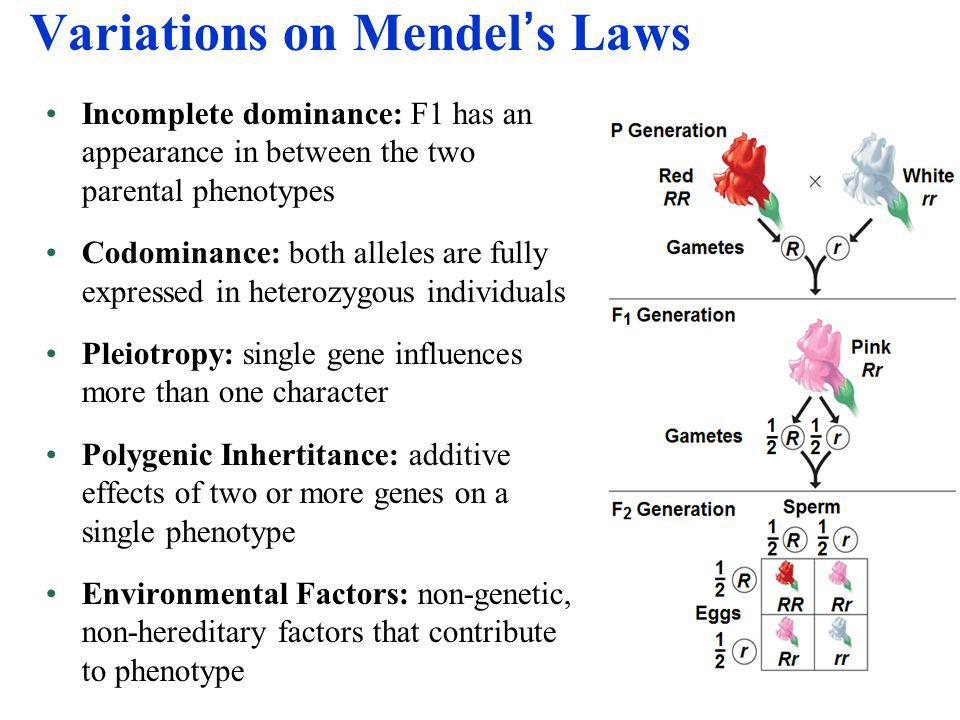 Variations on Mendel's Laws Incomplete dominance: F1 has an appearance in between the two parental phenotypes Codominance: both alleles are fully expr