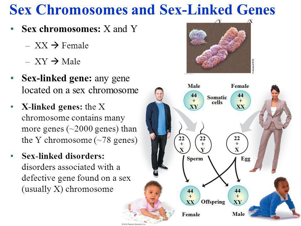 Sex Chromosomes and Sex-Linked Genes Sex chromosomes: X and Y –XX  Female –XY  Male Sex-linked gene: any gene located on a sex chromosome X-linked g