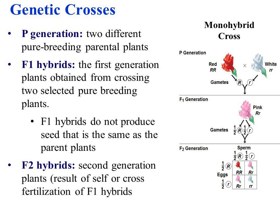 A monohybrid cross is a cross between purebred parents that differ in only one characteristic F1 generation: all show the trait of one parent (i.e.