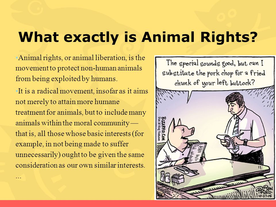 What exactly is Animal Rights.
