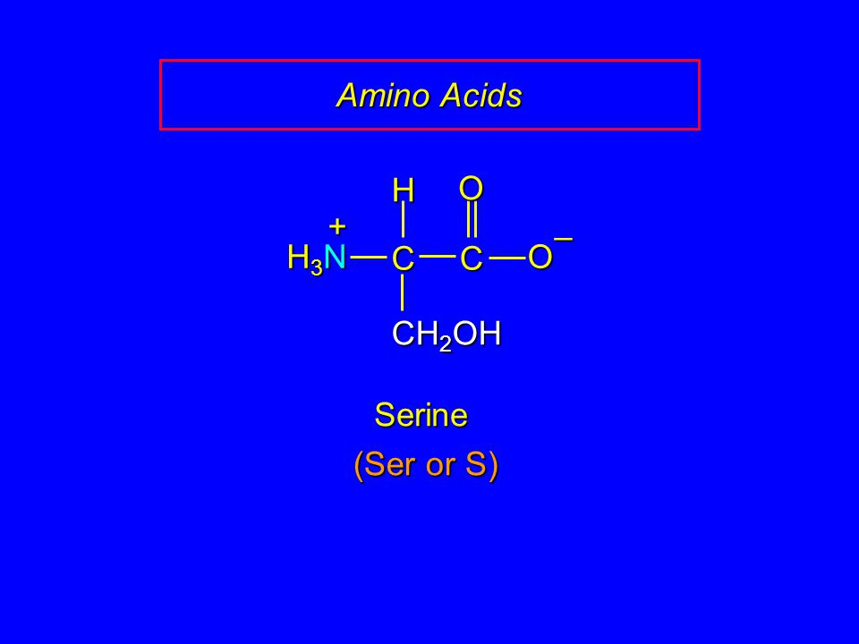 Amino Acids CC O O – CH 2 OH H H3NH3NH3NH3N + Serine (Ser or S)