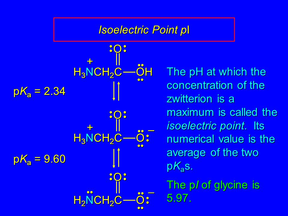 Isoelectric Point pI – OO H 3 NCH 2 C + – OO H 2 NCH 2 C OOH H 3 NCH 2 C + pK a = 2.34 pK a = 9.60 The pH at which the concentration of the zwitterion