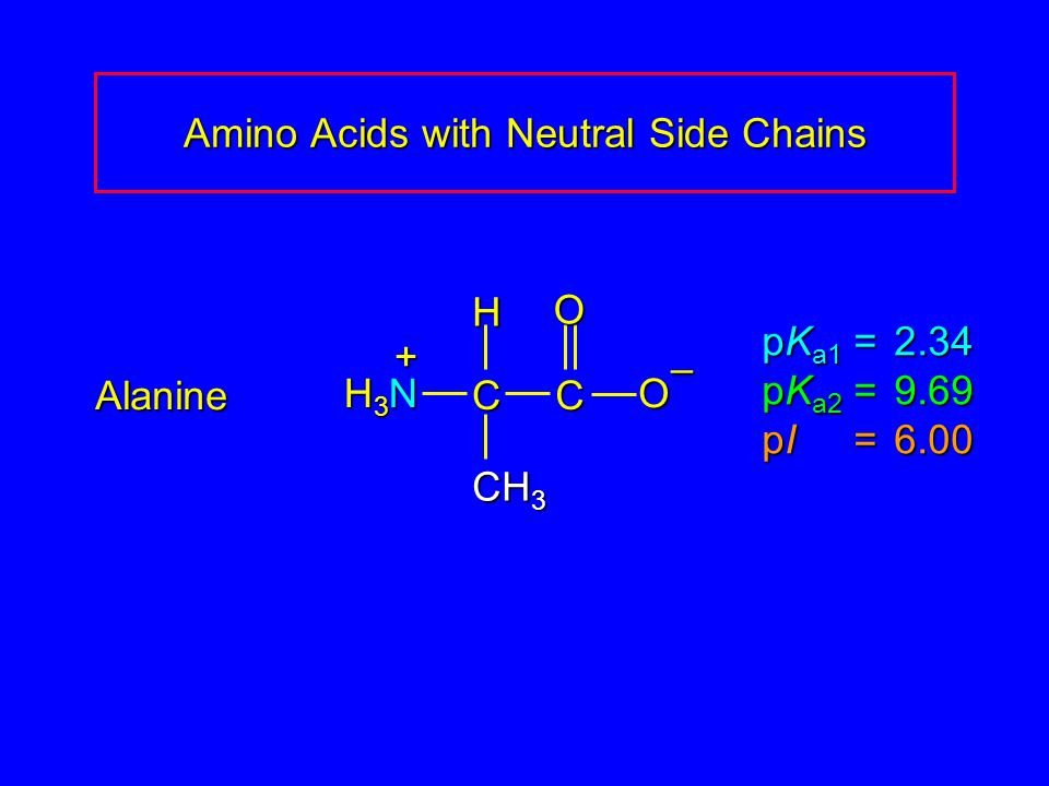 Amino Acids with Neutral Side Chains Alanine pK a1 = 2.34 pK a2 =9.69 pI =6.00 H3NH3NH3NH3N CCOO – CH 3 H +