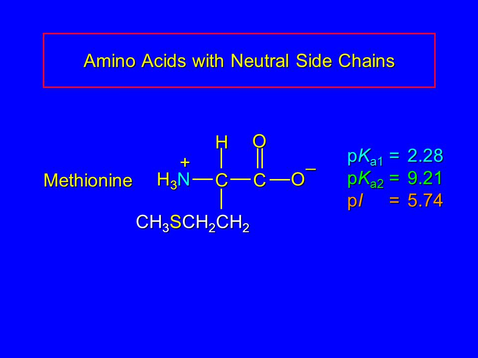 Amino Acids with Neutral Side Chains Methionine pK a1 = 2.28 pK a2 =9.21 pI =5.74 H3NH3NH3NH3N CC O O – CH 3 SCH 2 CH 2 H +